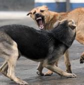 18 января 2017 года - Отлов бродячих собак